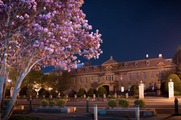 北海道札幌市にある大通公園内で西13丁目にある石造り歴史的建造物である札幌市資料館を背景に西12丁目の夜桜を撮った写真