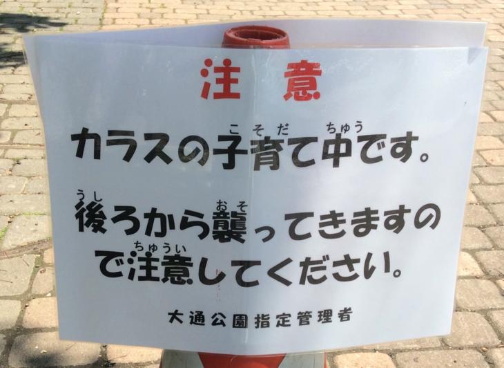 札幌のカラスが怖い!デカい!?札幌の特殊性とカラスの習性に注意!!