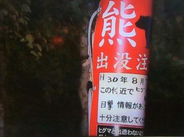 札幌市南区で騒動の熊/クマが駆除された様子と過去の熊情報